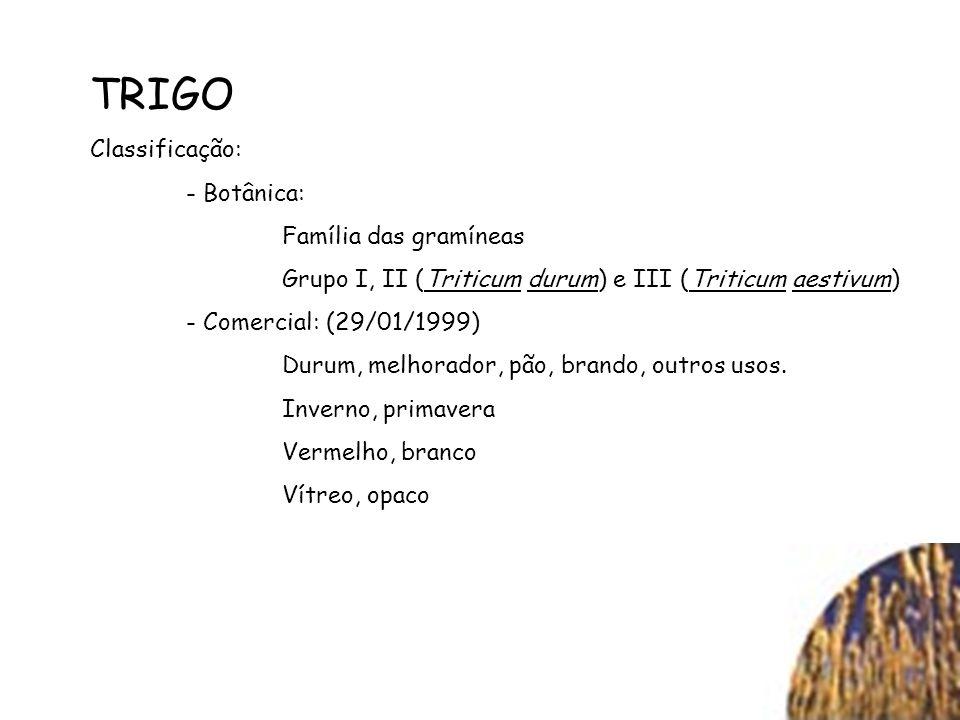 TRIGO Classificação: - Botânica: Família das gramíneas