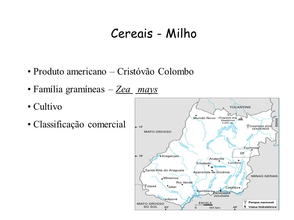 Cereais - Milho Produto americano – Cristóvão Colombo.
