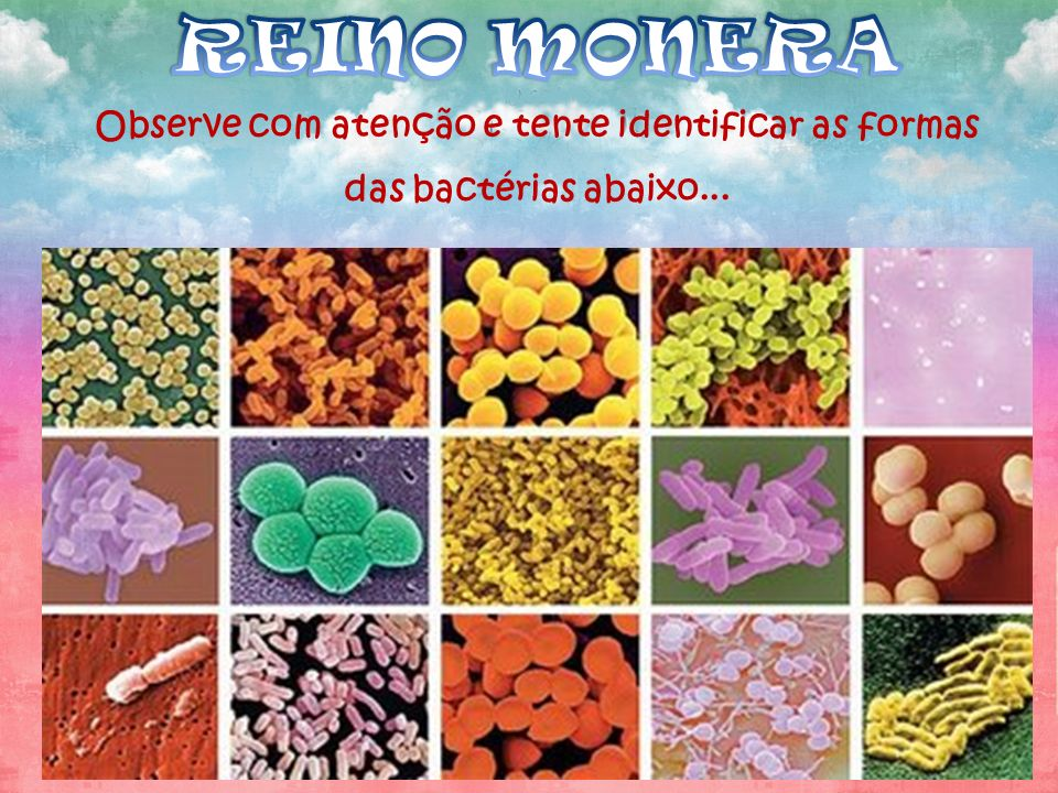 REINO MONERA Observe com atenção e tente identificar as formas das bactérias abaixo...