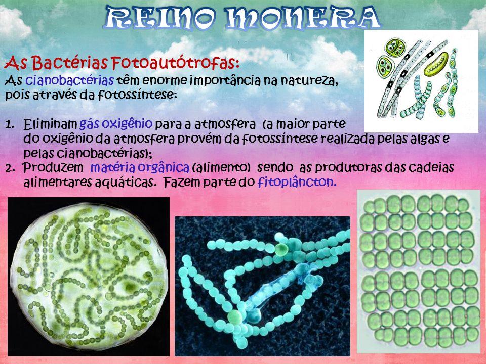 REINO MONERA As Bactérias Fotoautótrofas: