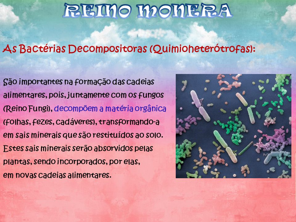 REINO MONERA As Bactérias Decompositoras (Quimioheterótrofas):