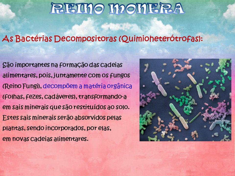 REINO MONERA As Bactérias Decompositoras (Quimioheterótrofas):