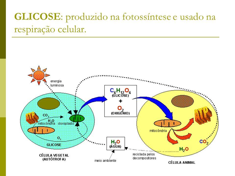 GLICOSE: produzido na fotossíntese e usado na respiração celular.