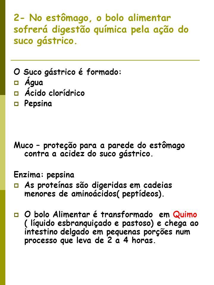 2- No estômago, o bolo alimentar sofrerá digestão química pela ação do suco gástrico.