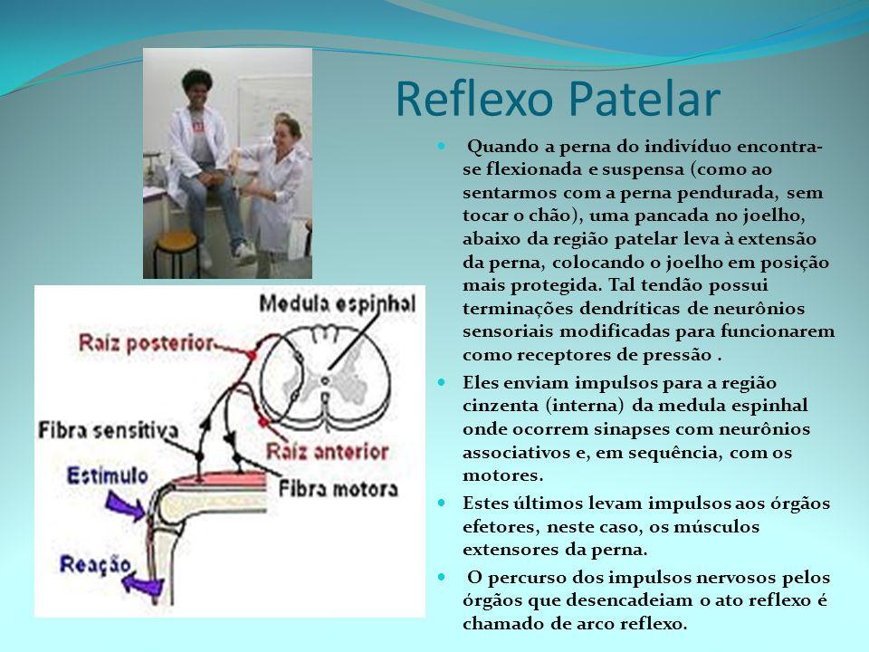 Reflexo Patelar