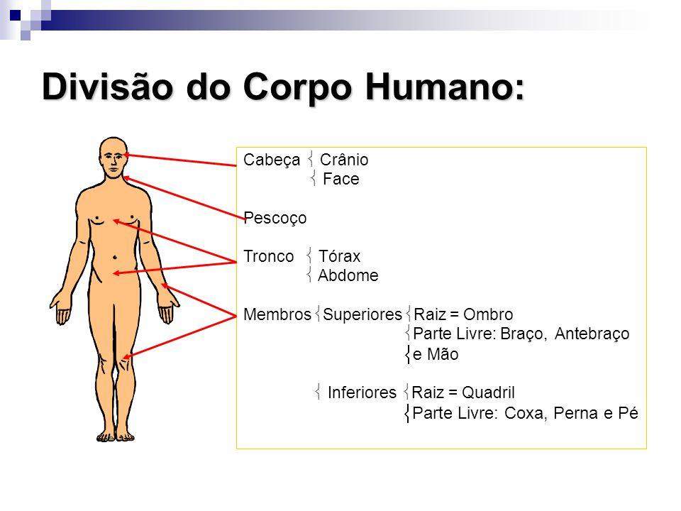 Divisão do Corpo Humano: