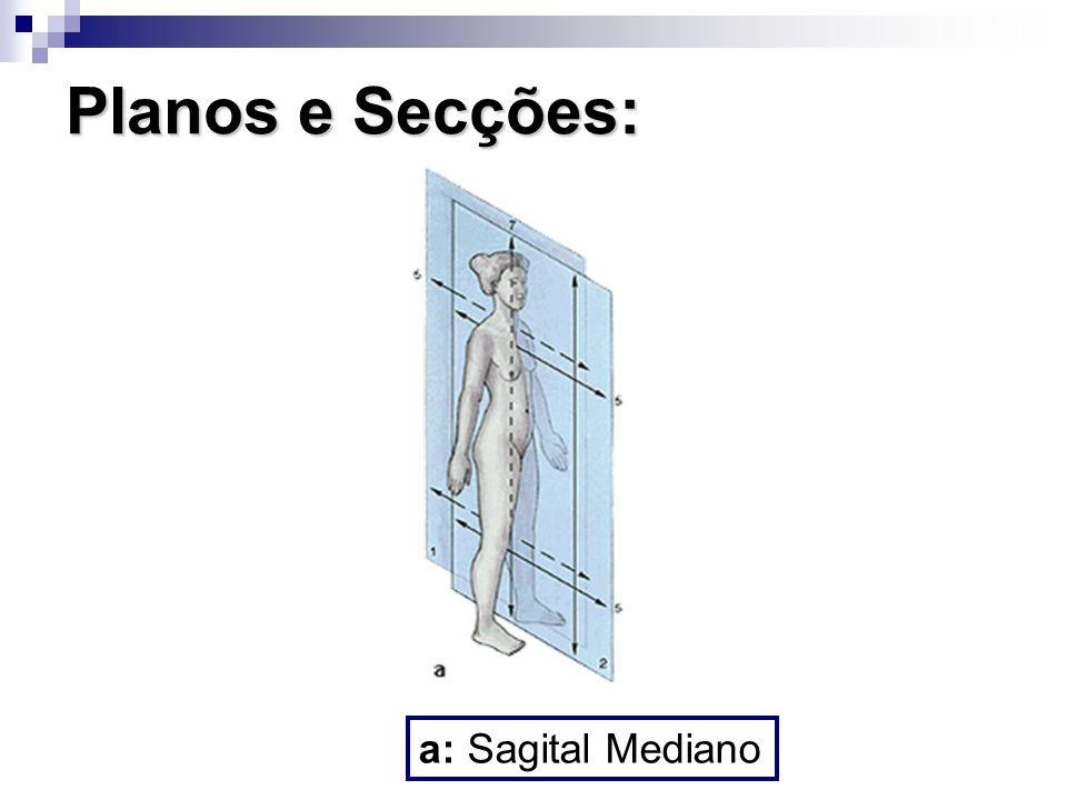 Planos e Secções: a: Sagital Mediano