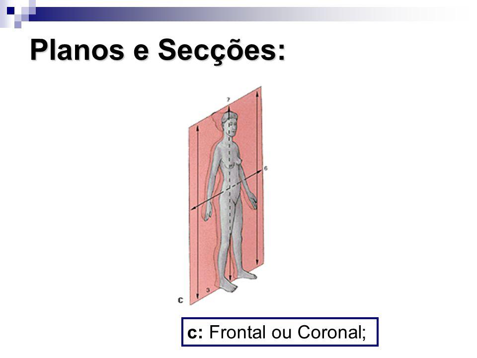 Planos e Secções: c: Frontal ou Coronal;