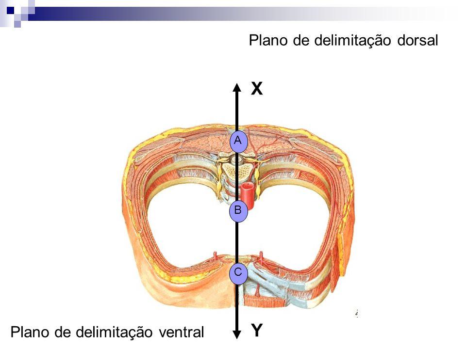 Plano de delimitação dorsal