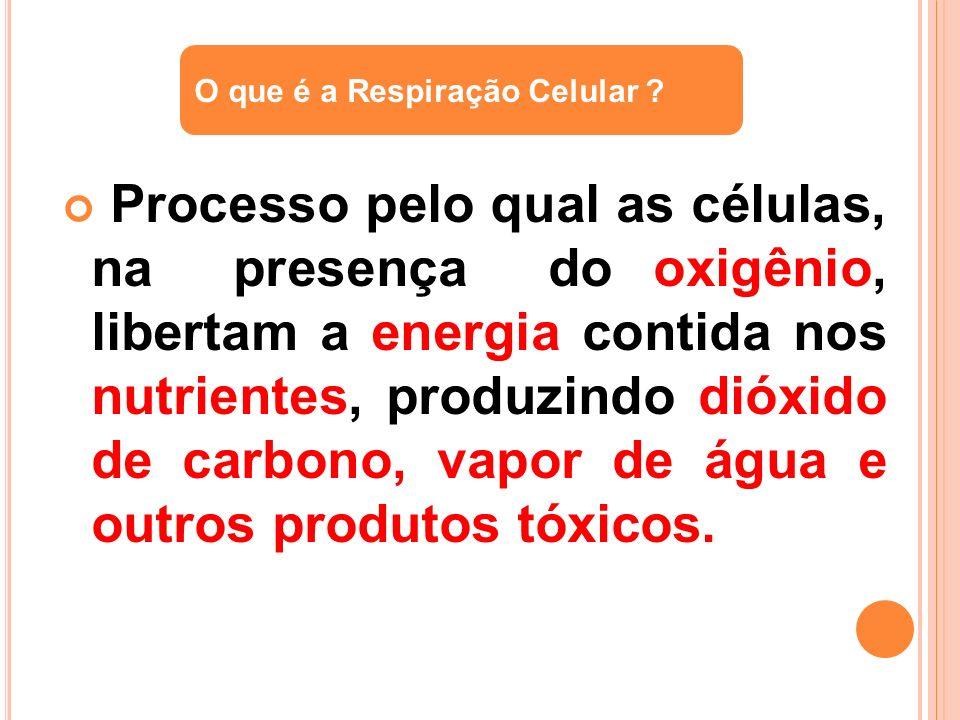 O que é a Respiração Celular