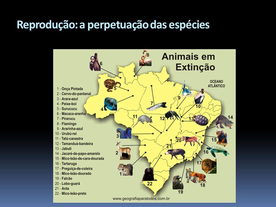 Reprodução: a perpetuação das espécies