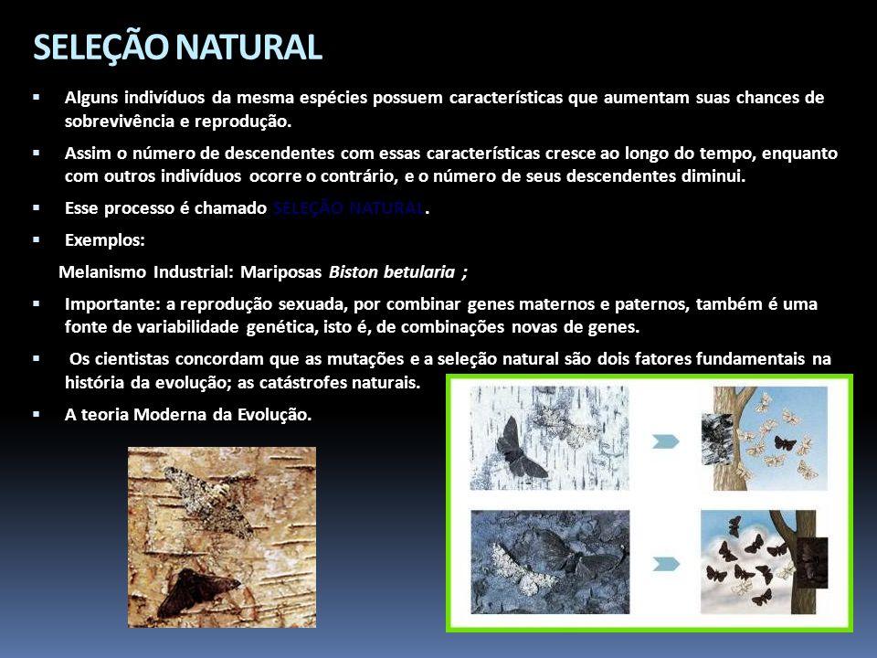 SELEÇÃO NATURAL Alguns indivíduos da mesma espécies possuem características que aumentam suas chances de sobrevivência e reprodução.