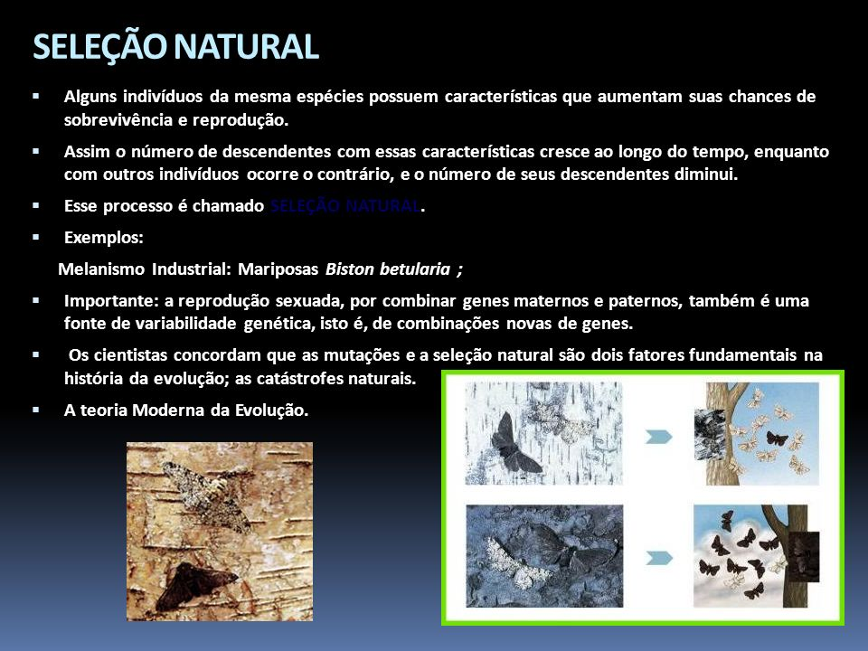 SELEÇÃO NATURALAlguns indivíduos da mesma espécies possuem características que aumentam suas chances de sobrevivência e reprodução.