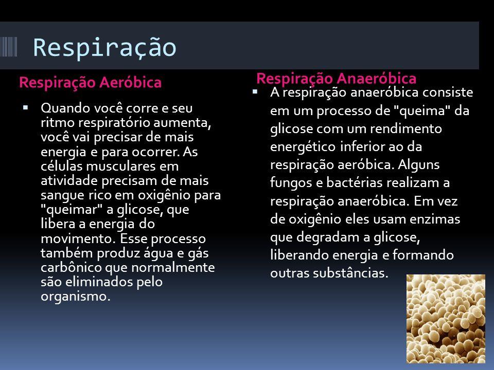 Respiração Respiração Anaeróbica Respiração Aeróbica