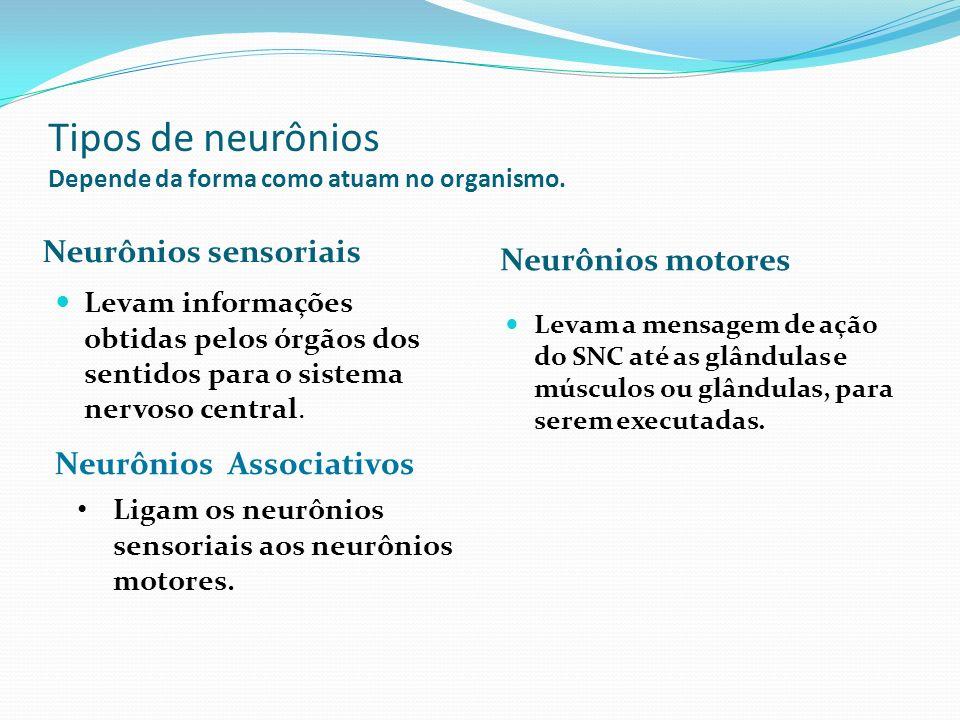 Tipos de neurônios Depende da forma como atuam no organismo.