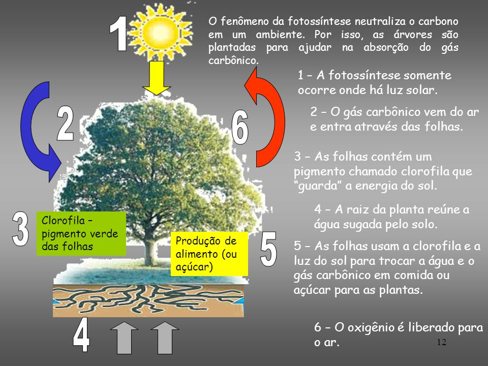 1 2 6 3 5 4 1 – A fotossíntese somente ocorre onde há luz solar.
