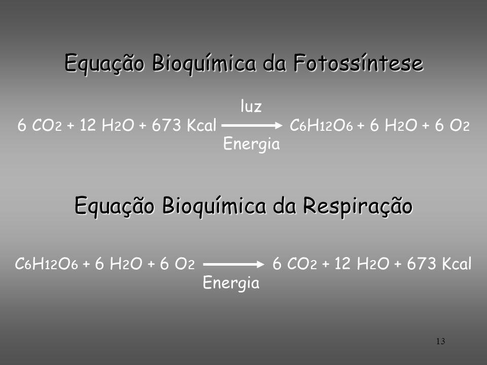 Equação Bioquímica da Fotossíntese