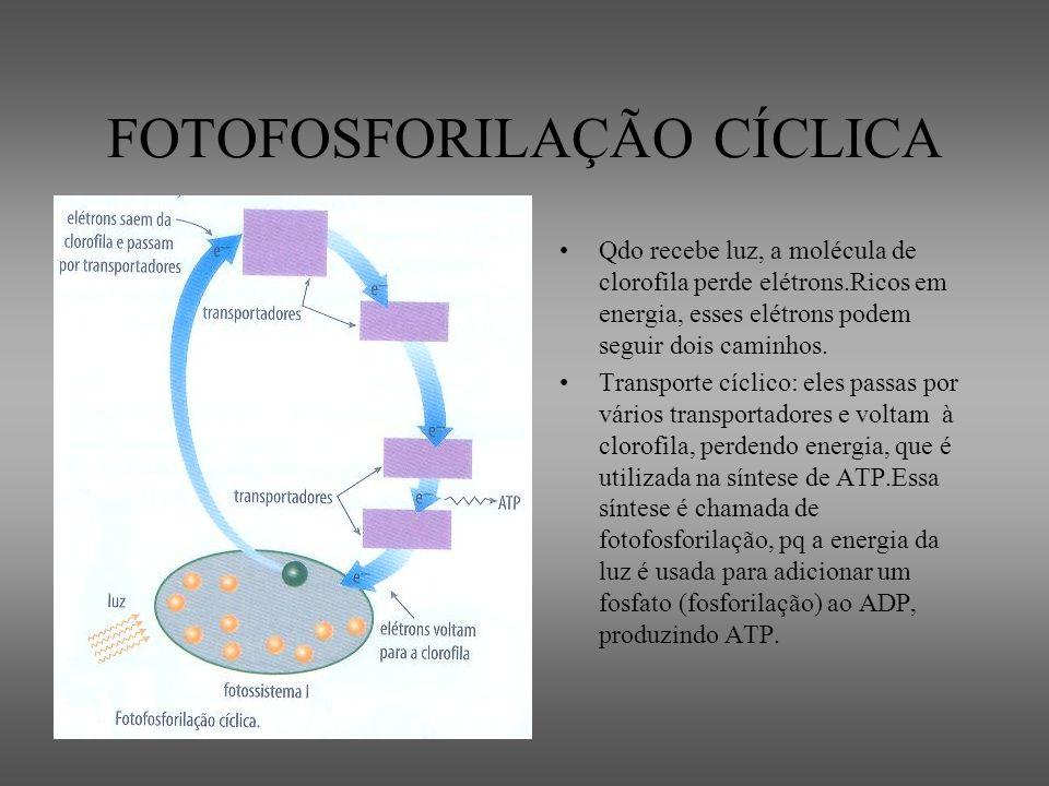 FOTOFOSFORILAÇÃO CÍCLICA
