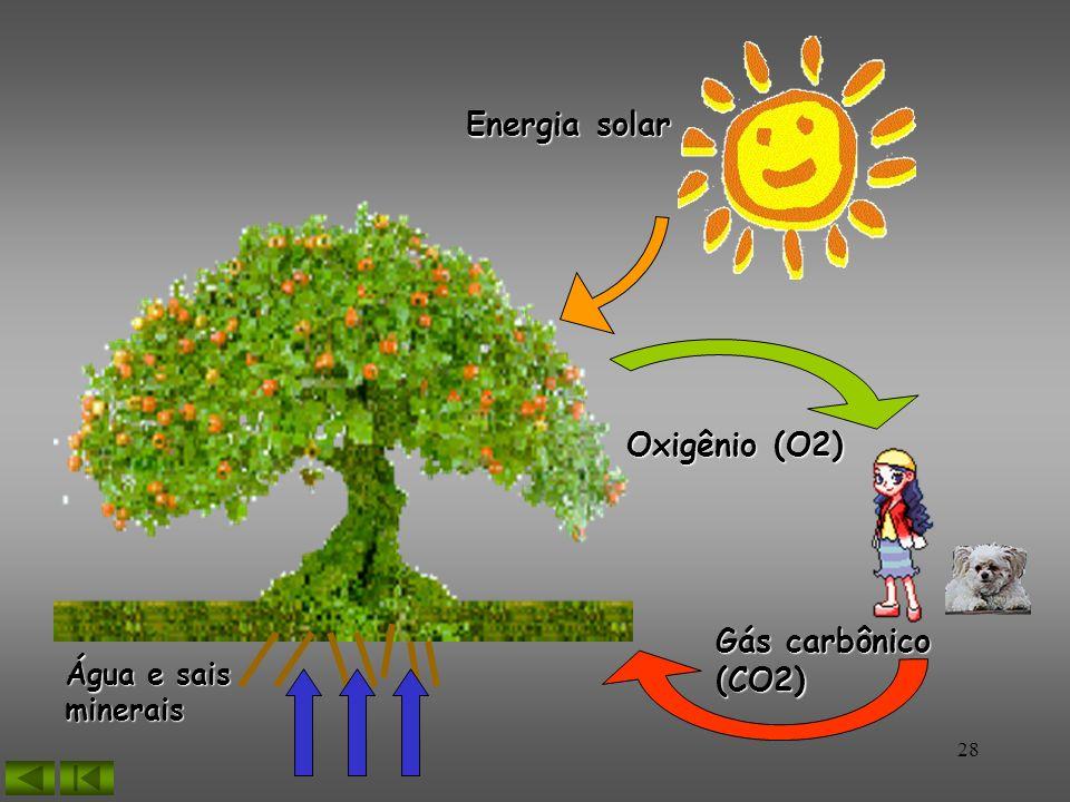 Energia solar Oxigênio (O2) Gás carbônico (CO2) Água e sais minerais