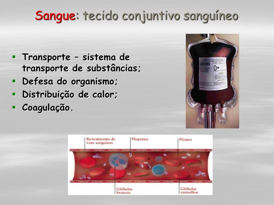 Sangue: tecido conjuntivo sanguíneo