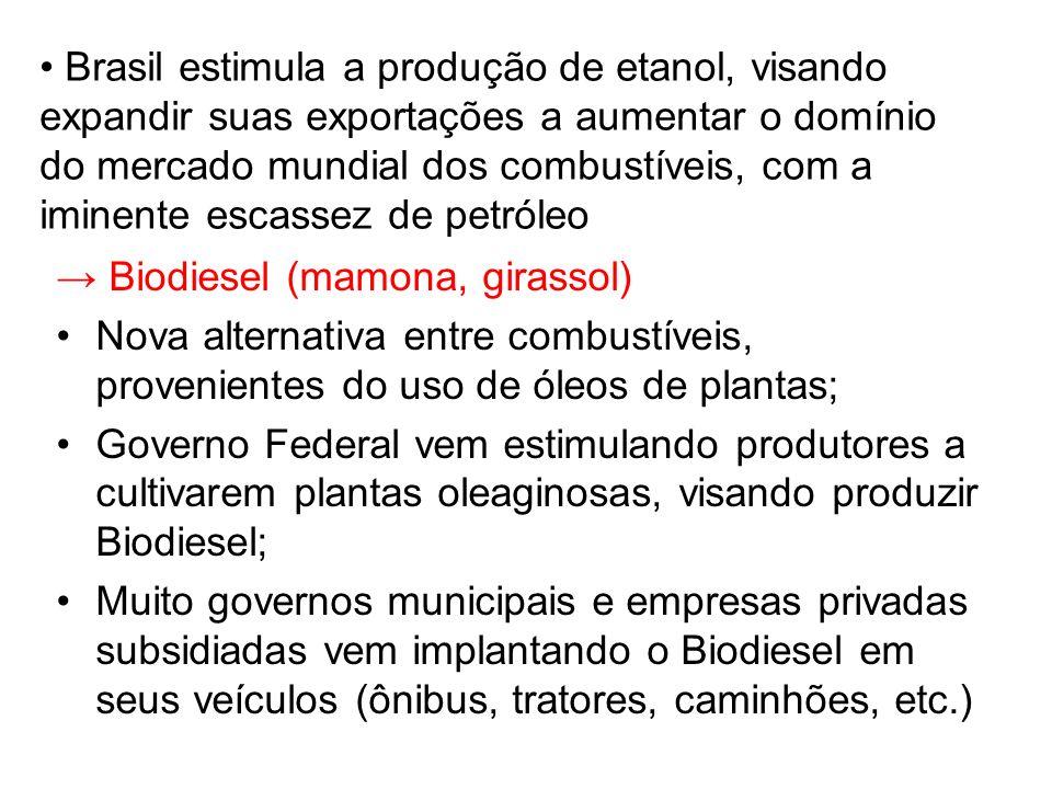 Brasil estimula a produção de etanol, visando expandir suas exportações a aumentar o domínio do mercado mundial dos combustíveis, com a iminente escassez de petróleo