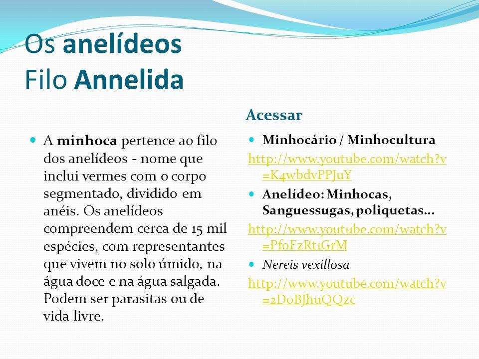 Os anelídeos Filo Annelida