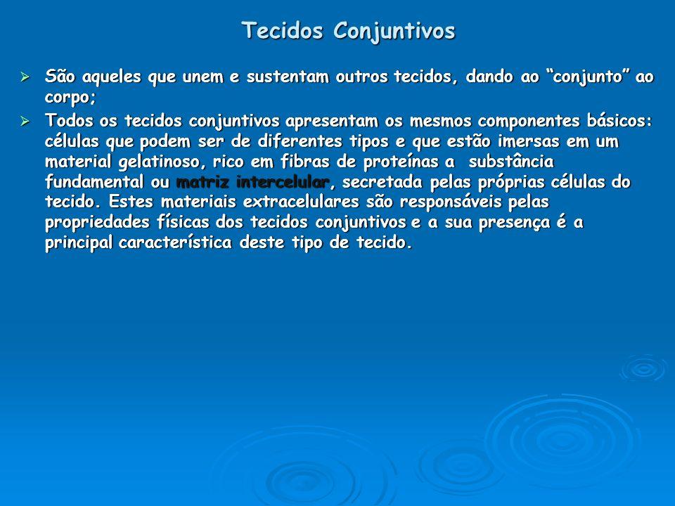 Tecidos Conjuntivos São aqueles que unem e sustentam outros tecidos, dando ao conjunto ao corpo;