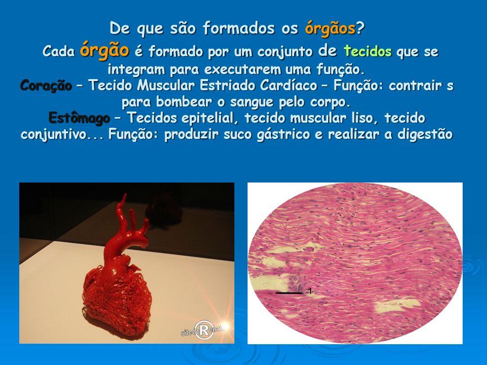 De que são formados os órgãos