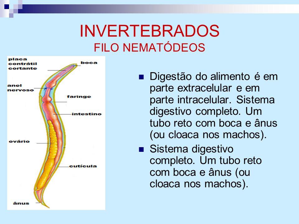 INVERTEBRADOS FILO NEMATÓDEOS