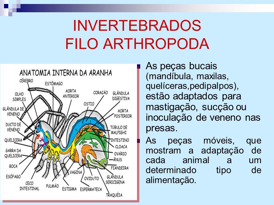 INVERTEBRADOS FILO ARTHROPODA