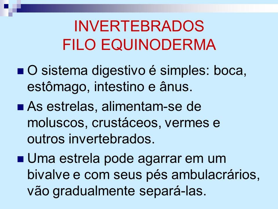 INVERTEBRADOS FILO EQUINODERMA