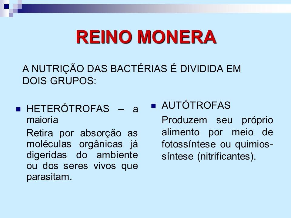 REINO MONERA A NUTRIÇÃO DAS BACTÉRIAS É DIVIDIDA EM DOIS GRUPOS: