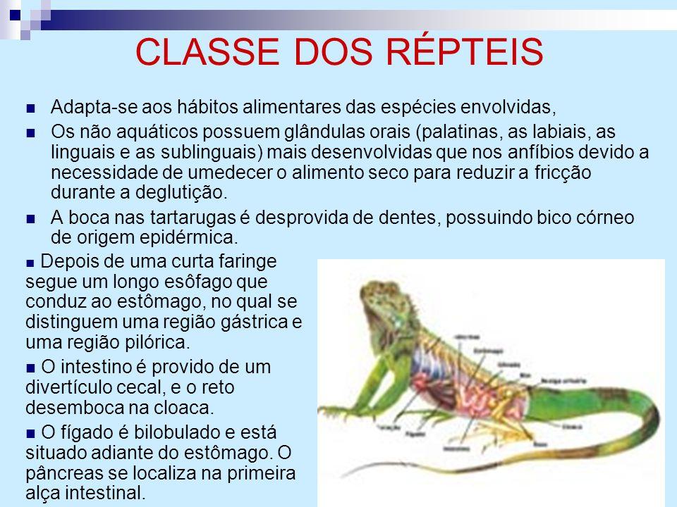 CLASSE DOS RÉPTEIS Adapta-se aos hábitos alimentares das espécies envolvidas,
