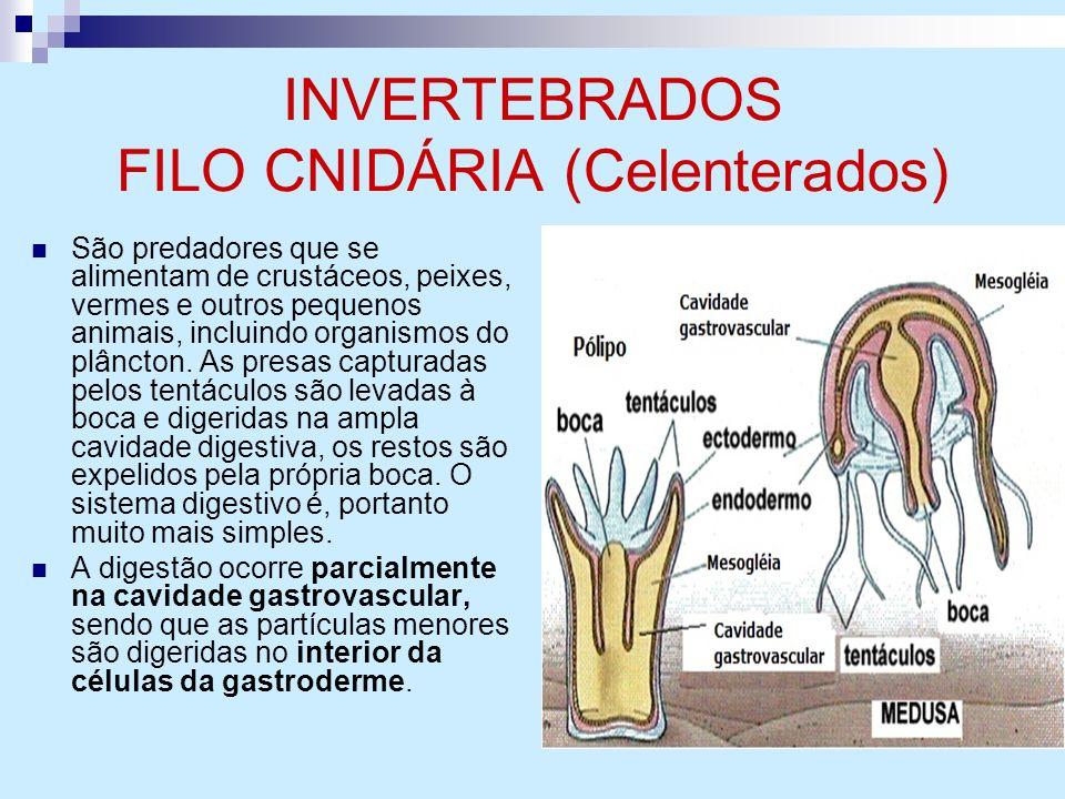 INVERTEBRADOS FILO CNIDÁRIA (Celenterados)