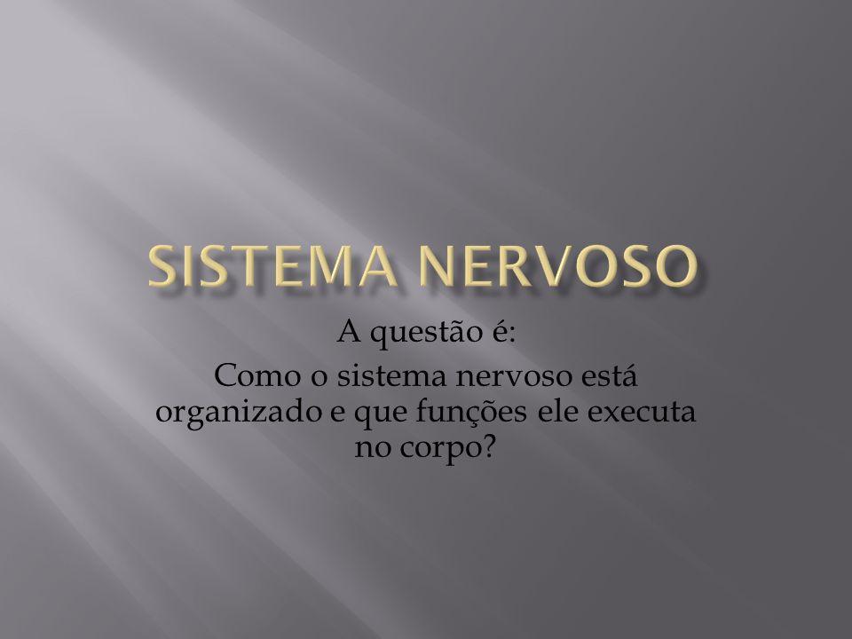 Sistema Nervoso A questão é: