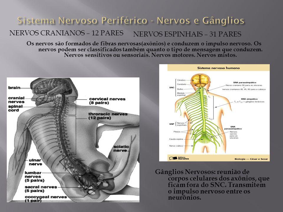 Sistema Nervoso Periférico - Nervos e Gânglios