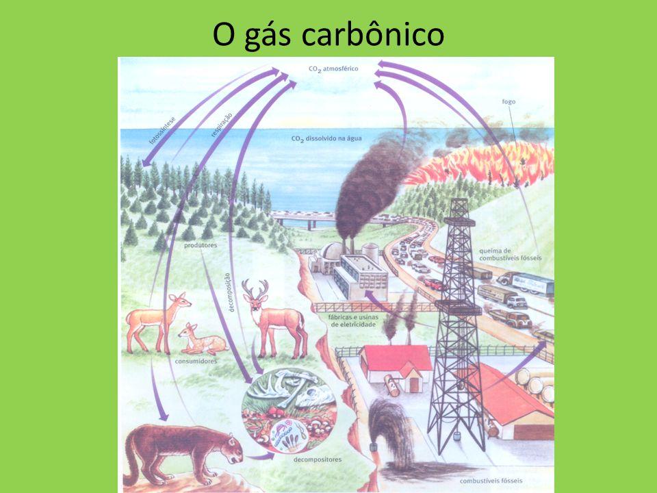 O gás carbônico