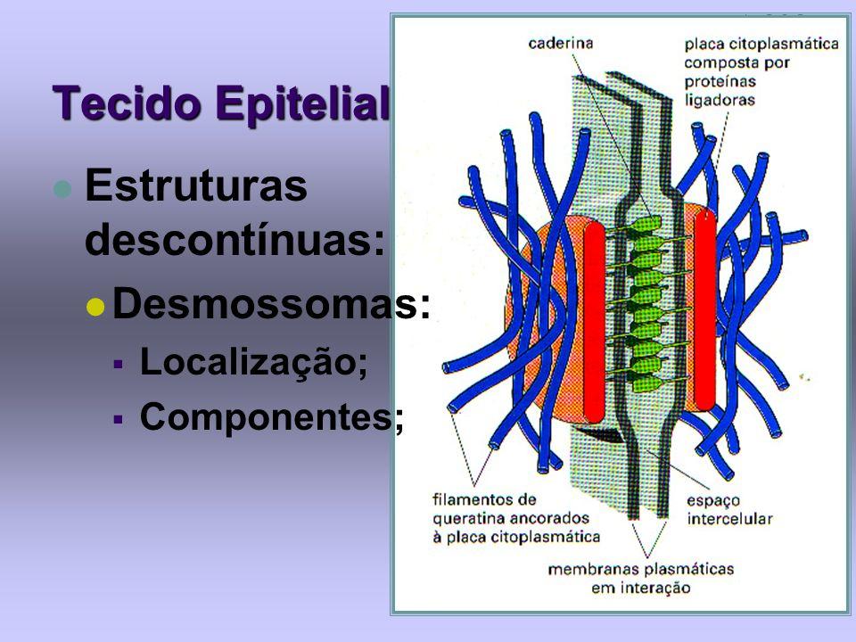 Tecido Epitelial Estruturas descontínuas: Desmossomas: Localização;