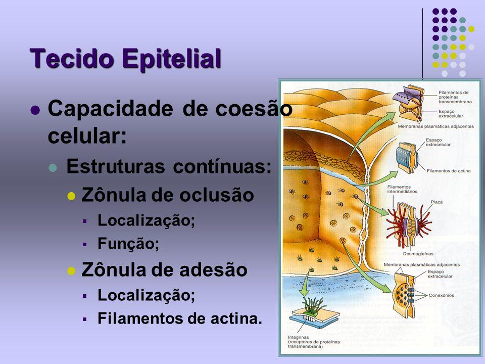 Tecido Epitelial Capacidade de coesão celular: Estruturas contínuas: