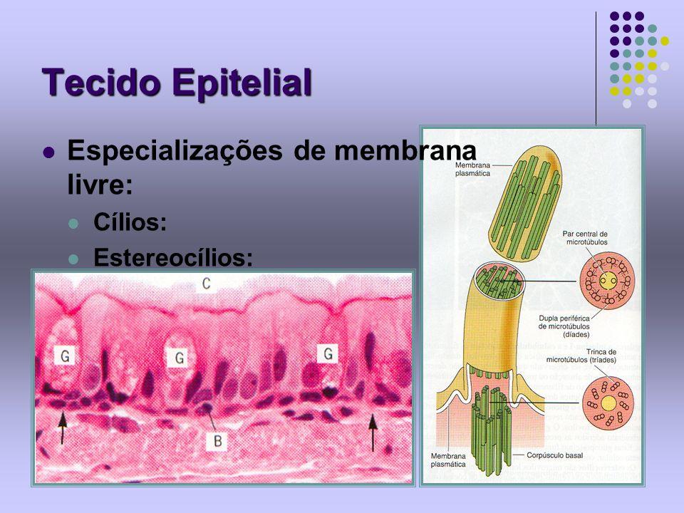 Tecido Epitelial Especializações de membrana livre: Cílios: