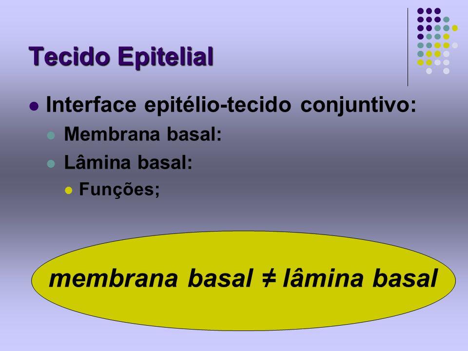 membrana basal ≠ lâmina basal