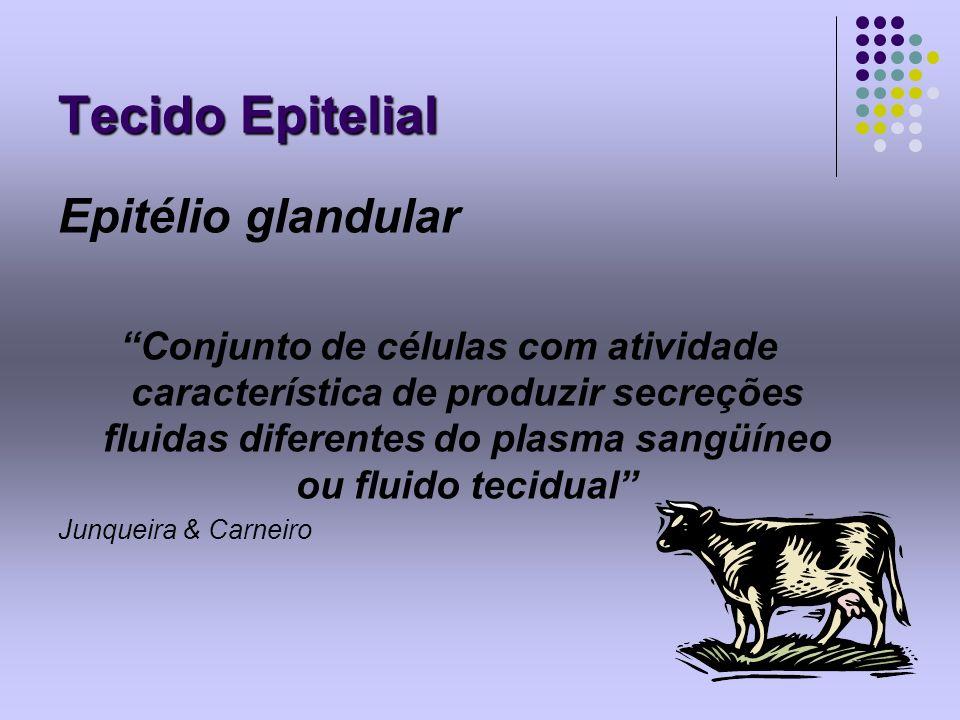 Tecido Epitelial Epitélio glandular
