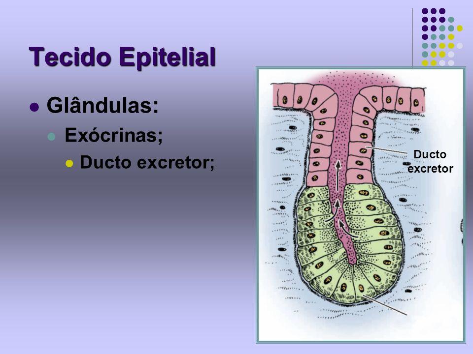 Tecido Epitelial Glândulas: Exócrinas; Ducto excretor; Ducto excretor