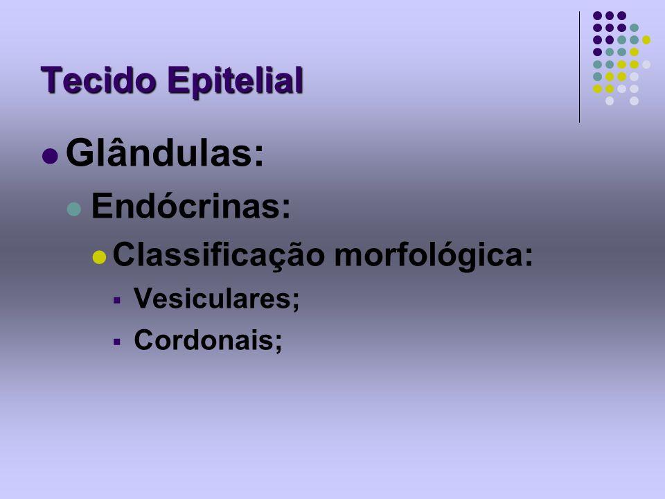 Glândulas: Tecido Epitelial Endócrinas: Classificação morfológica:
