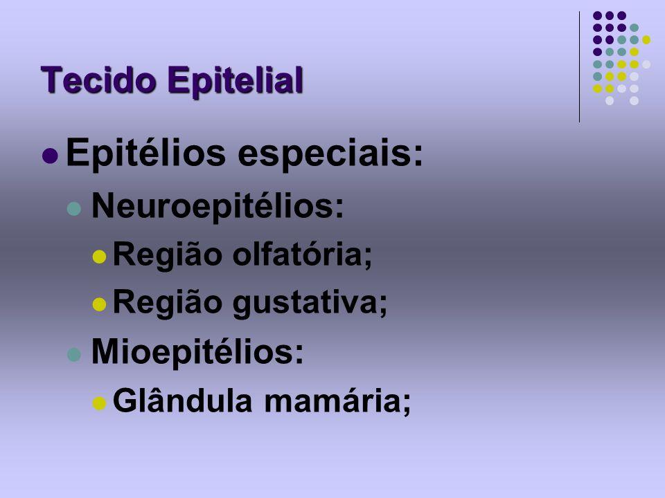 Epitélios especiais: Tecido Epitelial Neuroepitélios: Mioepitélios: