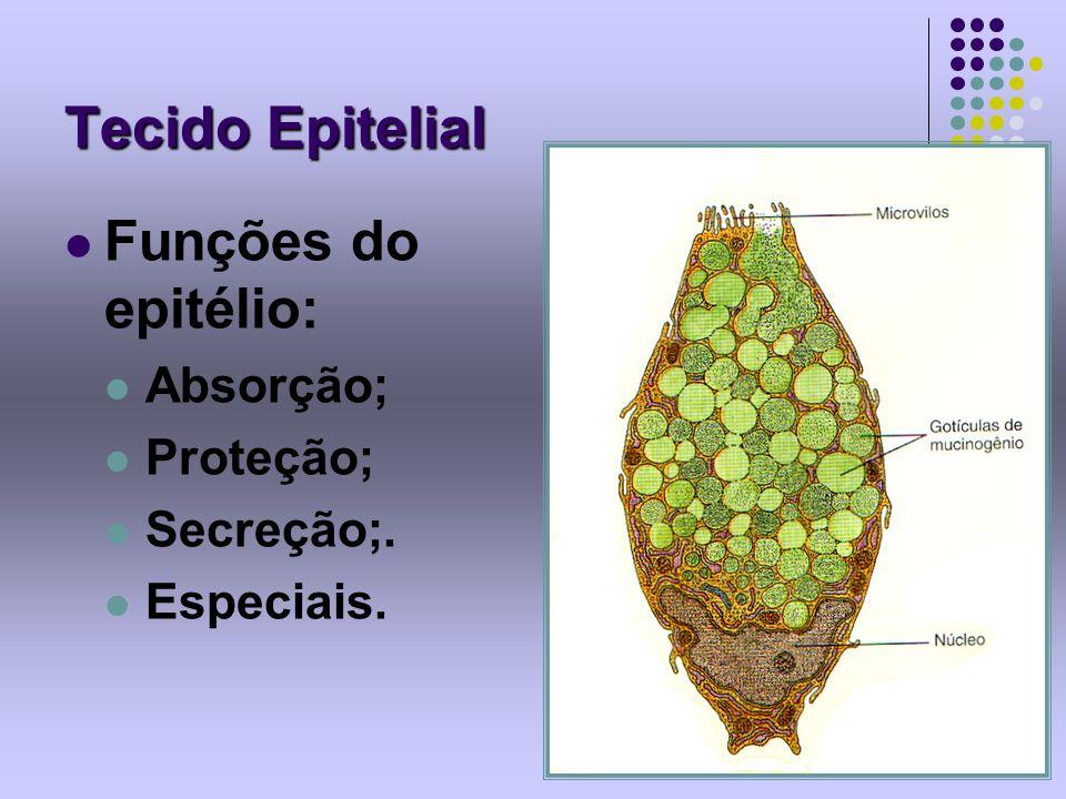 Tecido Epitelial Funções do epitélio: Absorção; Proteção; Secreção;.