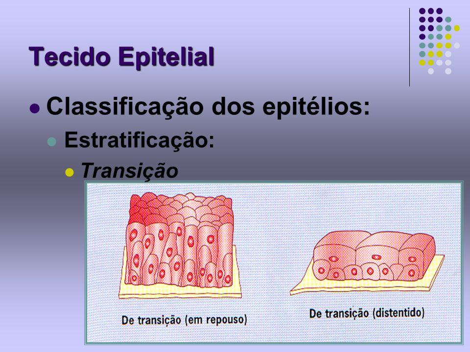 Tecido Epitelial Classificação dos epitélios: Estratificação: