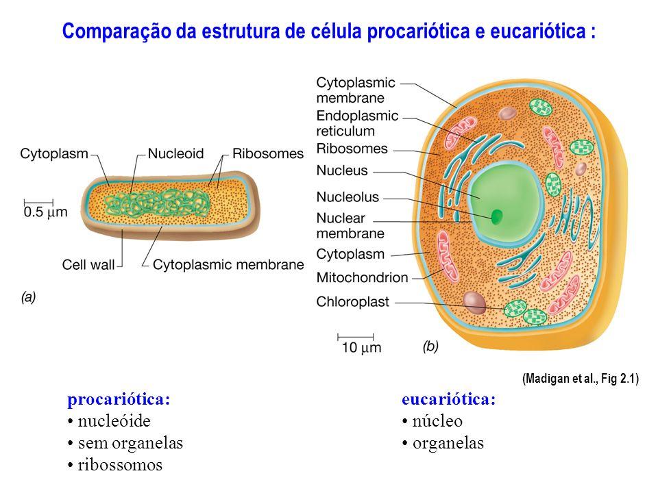 Comparação da estrutura de célula procariótica e eucariótica :