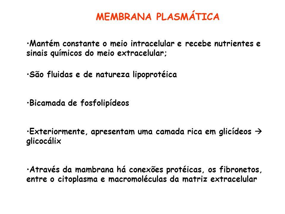 MEMBRANA PLASMÁTICA Mantém constante o meio intracelular e recebe nutrientes e sinais químicos do meio extracelular;