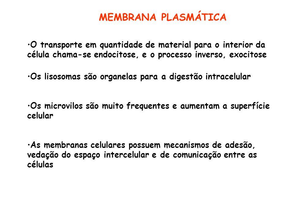 MEMBRANA PLASMÁTICA O transporte em quantidade de material para o interior da célula chama-se endocitose, e o processo inverso, exocitose.